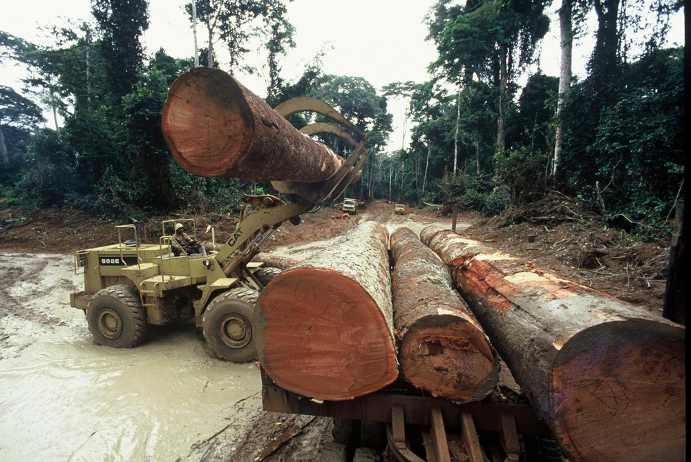 Logging in the Republic of Congo. The timber trade provides significant income for the country's economy. Logging concessions also provide important habitat for wildlife such as forest elephants and gorillas. Therefore, effective conservation requires collaboration between loggers and protected area authorities. (© Michel Gunther / WWF)