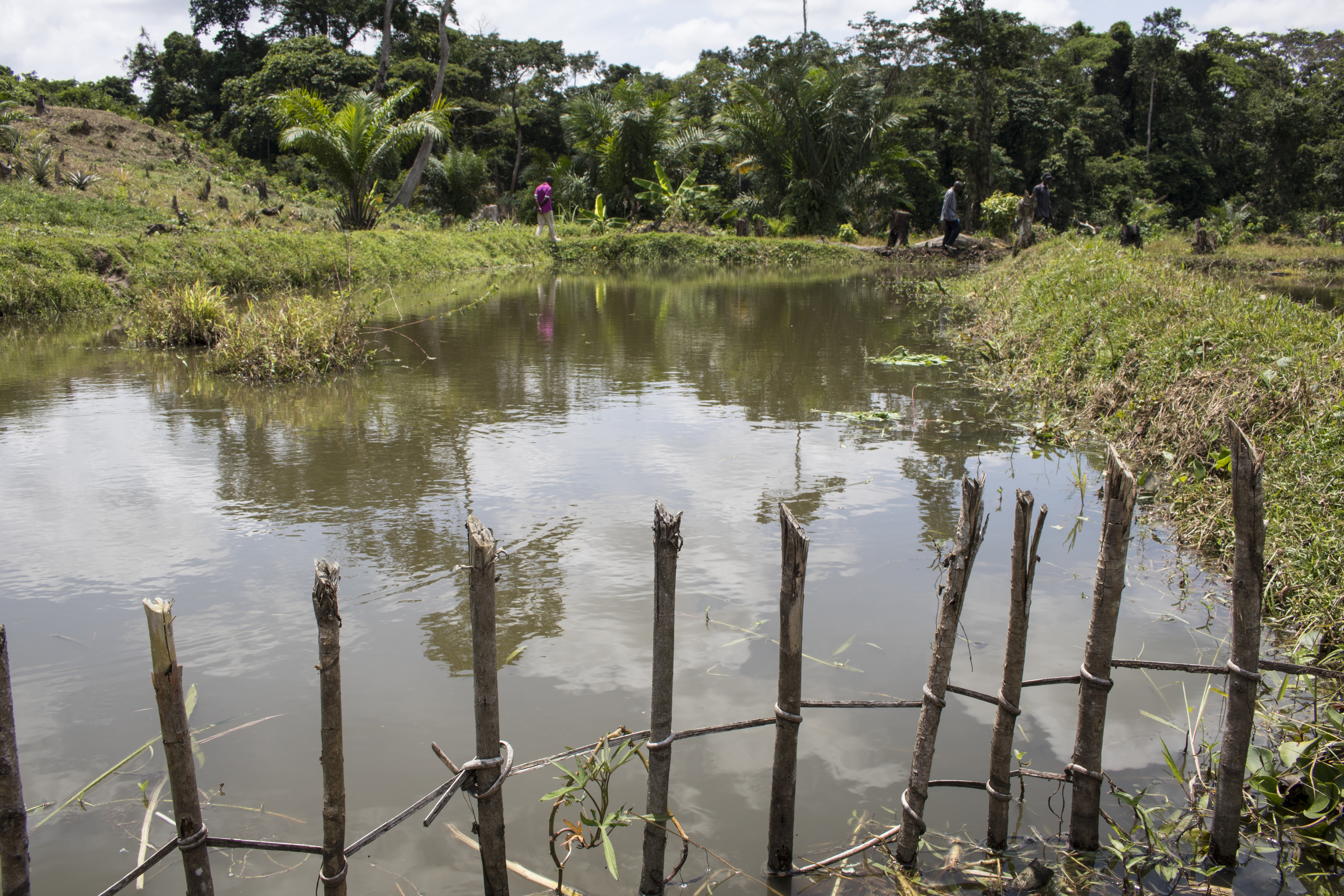 A manmade fishpond at a model farm in Monkoto. By diversifying their products, farmers can bring in more income while getting higher yields out of existing farmland, reducing their need to cut down more forest. (Photo by Molly Bergen/WCS, WWF, WRI)